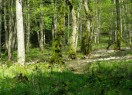 boschi-casentini