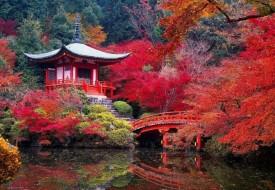 Viaggio di nozze in Giappone e isole più belle del mondo